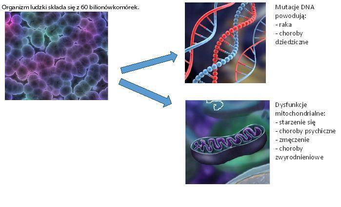 60 bln komórek